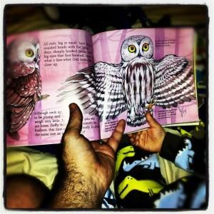 OwlsStory